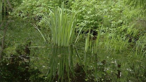 Ein gelbes Iris Gras
