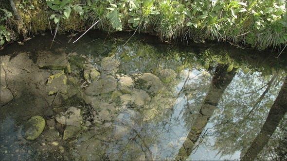 L' eau claire avec le reflet de l'arbre