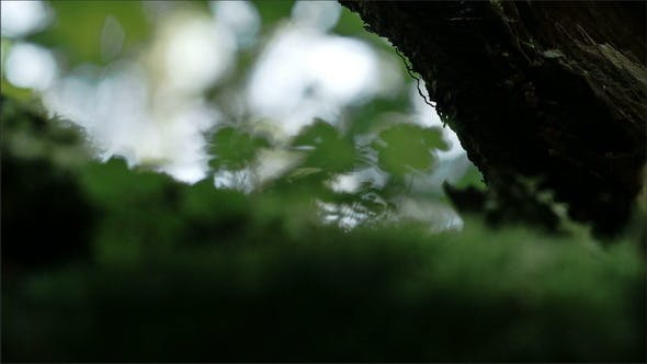 Thumbnail for Green Small Plants on a Mystic Forest