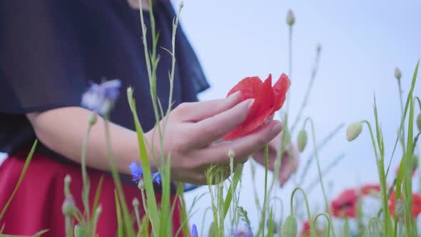 Thumbnail for Unrecognizable Young Slim Girl Touching Red Flower with Her Hand in a Poppy Field Close-up