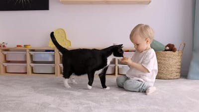 Cute Toddler Child Giving Treats to his Cat Pet at Home sitting on the Floor, Kids and Pets