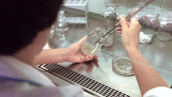 Thumbnail for Female Biologist Making Experiments with Plants. Plants in Test Tube