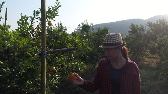 The owner of the orange garden is happy with the orange garden. And the expression of pride.