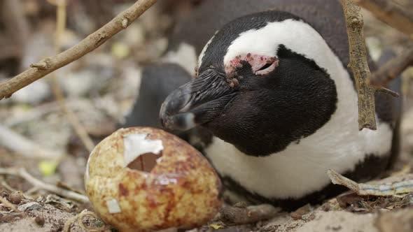 Cute Penguin Portrait