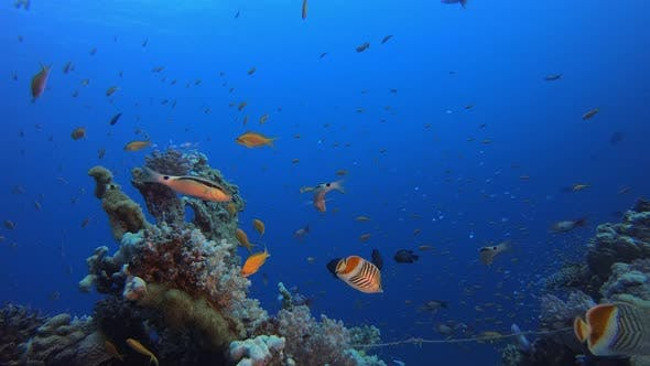 Cover Image for Marine Coral Garden