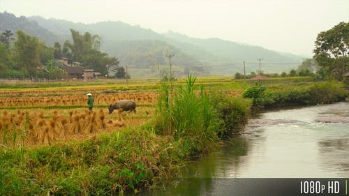 Farming on a Rice Terrace in the Scenic Rural Countryside of Northern Vietnam