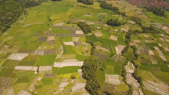 Landscape with Farmlands and Rice Terrace Field Bali Indonesia