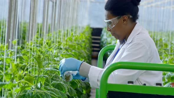 Agronomist Putting Pesticides on Plants in Greenhouse