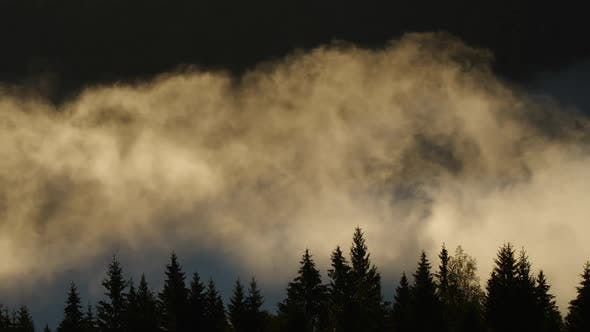 Thumbnail for Morning Fog in the Forest, Natural Beautiful Nature Landscape in Mountain, Background