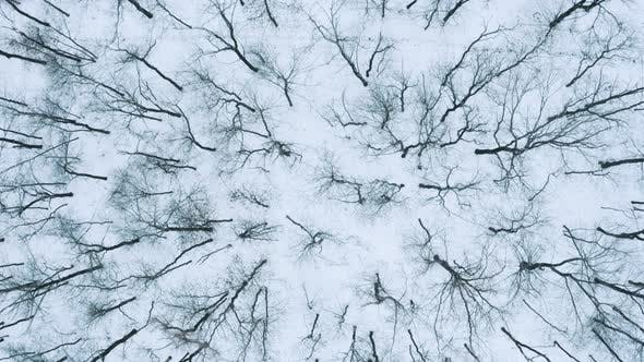 Thumbnail for Winter  Black Forest