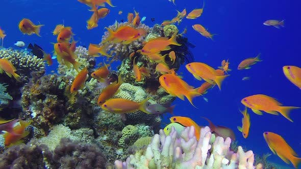 Cover Image for Tropical Sea Fishes Underwater