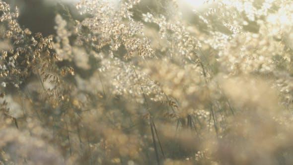 Thumbnail for Morning Grass