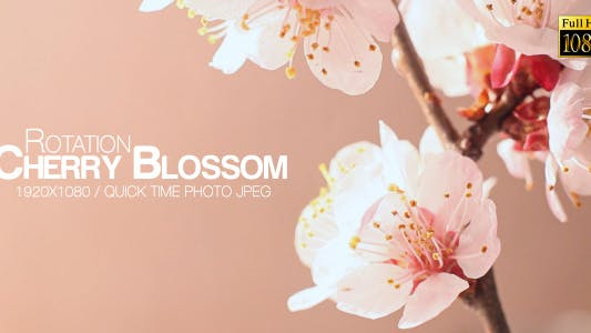 Cover Image for Beautiful Cherry Blossom