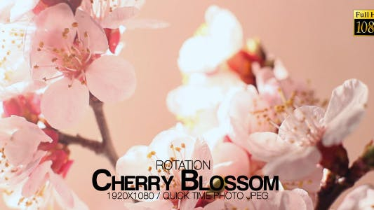 Cover Image for Beautiful Cherry Blossom 2