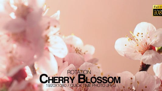 Thumbnail for Beautiful Cherry Blossom 3