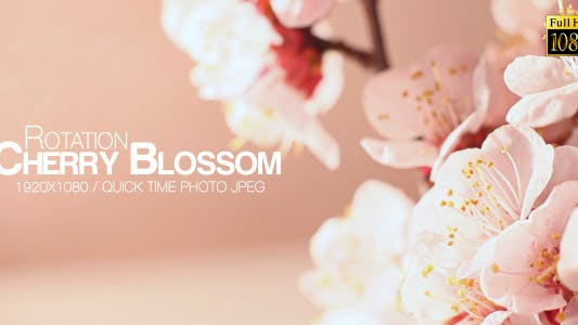 Thumbnail for Beautiful Cherry Blossom 4