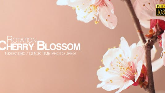 Thumbnail for Beautiful Cherry Blossom 5