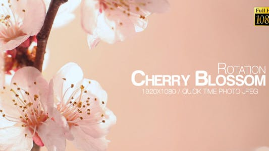 Cover Image for Beautiful Cherry Blossom 7