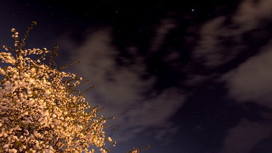 Thumbnail for Starry Night With A Shadow Of A Tree In Foreground