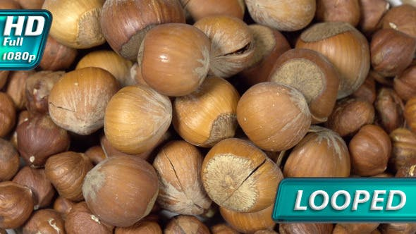 Thumbnail for Hazelnuts in Shell