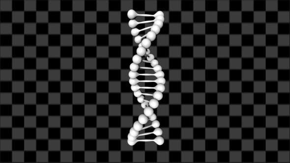 Thumbnail for DNA-Bewegung (9er-Pack)