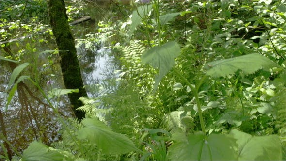 Thumbnail for Lots of Herbs Near the Swamp
