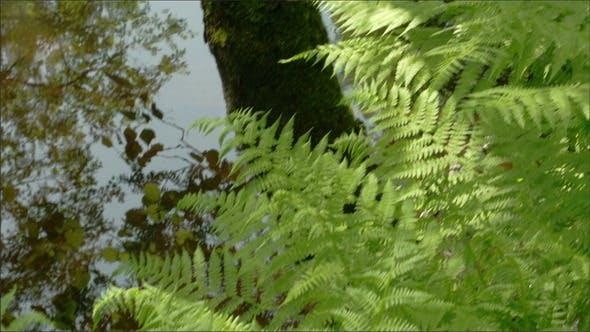 Fougères vertes sur la forêt