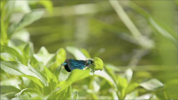 Thumbnail for The Beauty of the Dragonfly as its Spread its Wing