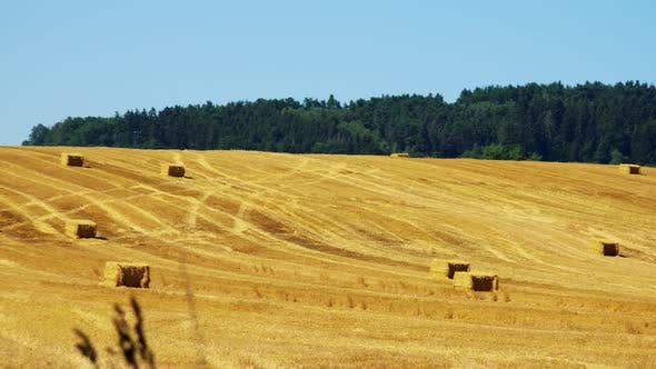 Cover Image for Farmers Harvest Grain From the Field (Farmer Travel with Tractor Over Field) - Sunny Day