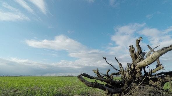 Thumbnail for Dried Root of a Tree and Clouds