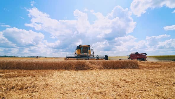 Thumbnail for Harvester agricultural machine. Agricultural machine ride in the field of golden ripe wheat