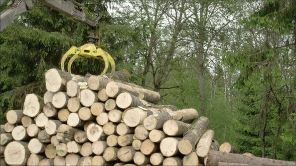 Thumbnail for The Heaps of Logs Transferred Using a Crane