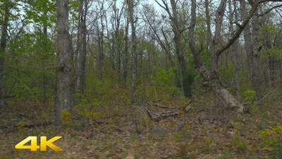 Dolly through Forest | Tracking Shot