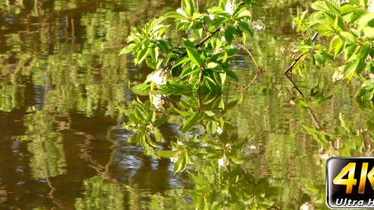 Thumbnail for Leaves and Flowers on Green Lake 2
