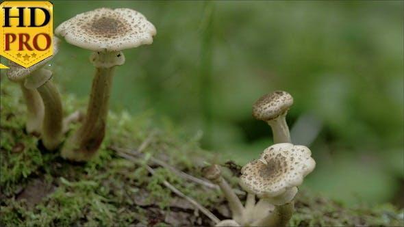 Näher des Fünf sprießenden Pilzes