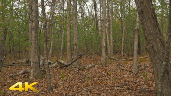 Thumbnail for Walking through a Lush Forest