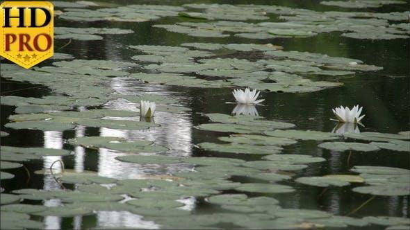 Thumbnail for Set von Seerosen auf dem Teich