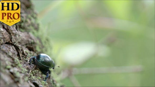 A Dung Beetle Crawling on a Tree With its Tiny Leg