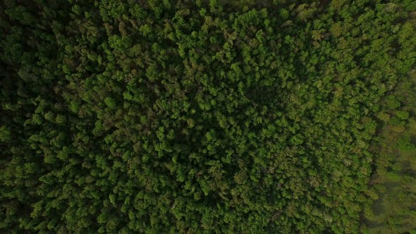Thumbnail for Satellite Aerial View of Forest