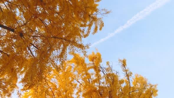 Thumbnail for Vorbei an Bäumen mit schönen Herbstfarben