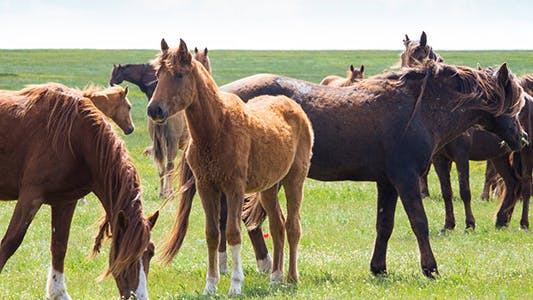 Cover Image for Wild Horses 3