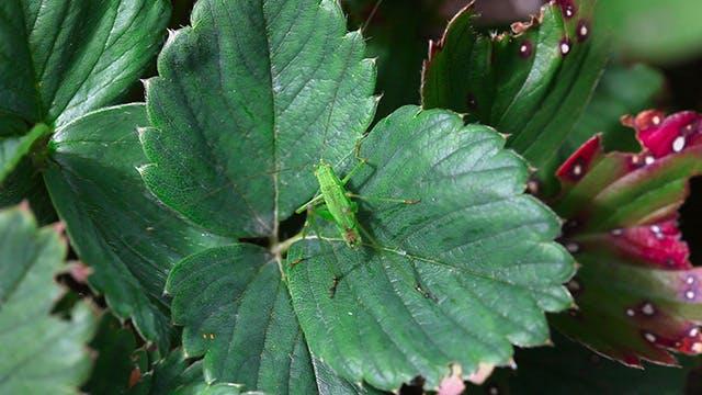 Thumbnail for Grasshopper 2