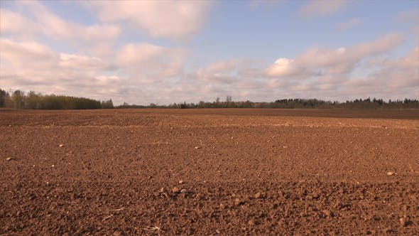 Thumbnail for Cultivated Field