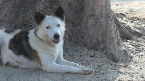 Thumbnail for Dog Sitting On Sand Under Base Of Tree