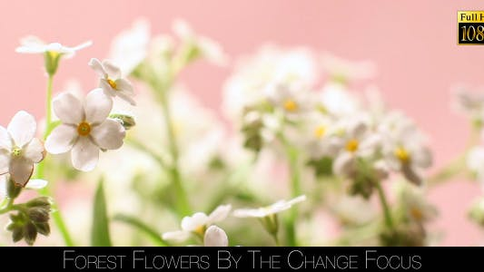 Thumbnail for Forest Flowers By The Change Focus