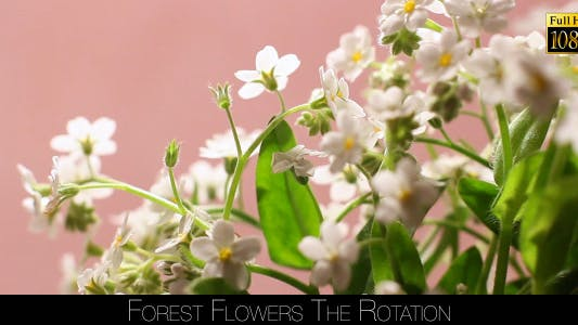 Cover Image for Forest Flowers The Rotation