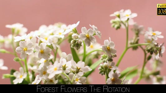 Cover Image for Forest Flowers The Rotation 2
