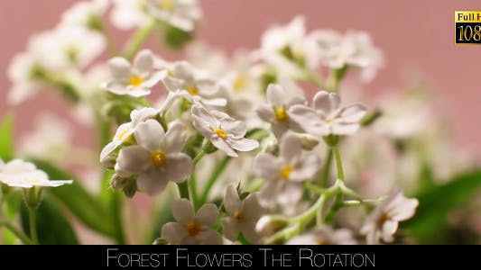 Thumbnail for Forest Flowers The Rotation 3