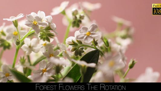 Thumbnail for Forest Flowers The Rotation 4