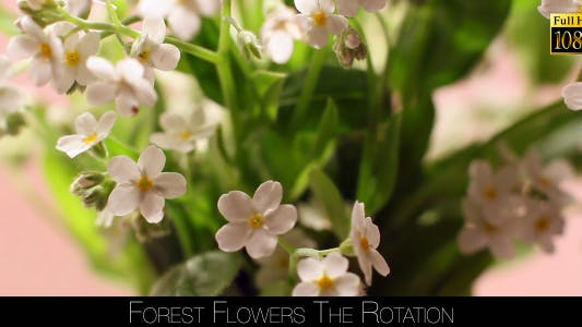 Thumbnail for Forest Flowers The Rotation 5
